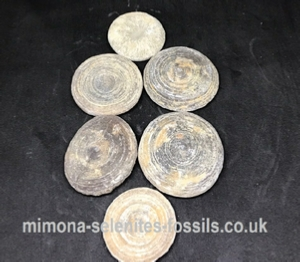 Coral Fossils Product For Sale