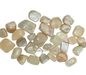 Goniatite Product For Sale